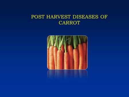 POST HARVEST DISEASES OF CARROT. Post harvest diseases of carrot Sour rot - Geotrichum candidum Sour rot - Geotrichum candidum Crown rot - Rhizoctonia.