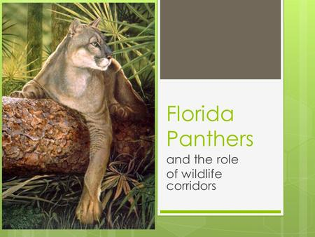 Florida Panthers and the role of wildlife corridors.