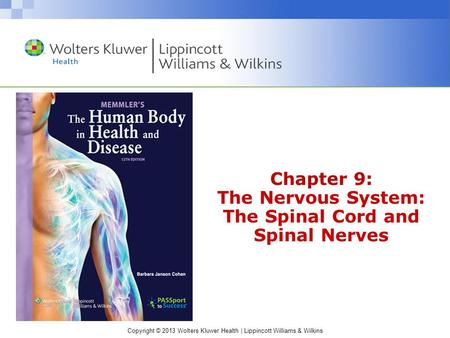 Chapter 9: The Nervous System: The Spinal Cord and Spinal Nerves