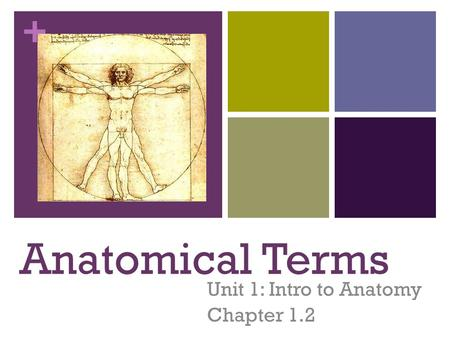 + Unit 1: Intro to Anatomy Chapter 1.2 Anatomical Terms.