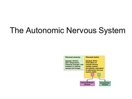 The Autonomic Nervous System. Visceral sensory Visceral motor &