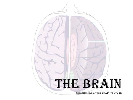 THE BRAIN THE MIRACLE OF THE BRAIN-YOUTUBE. OVERVIEW--NERVOUS SYSTEM Nervous System Central Nervous System Brain Spinal Cord (connects brain with PNS)