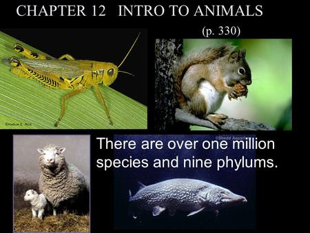 CHAPTER 12 INTRO TO ANIMALS (p. 330) There are over one million species and nine phylums.