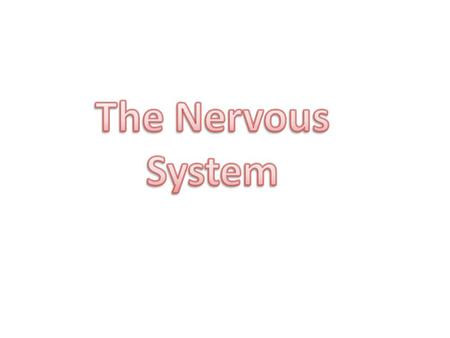 Nervous System: coordinates and controls body activity. It detects and processes internal and external information and sends out an appropriate response.