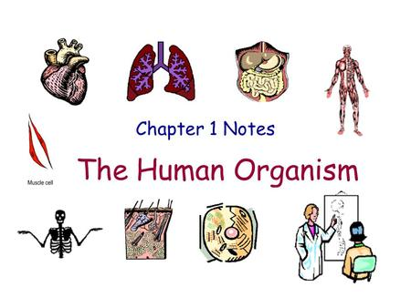 Chapter 1 Notes The Human Organism.