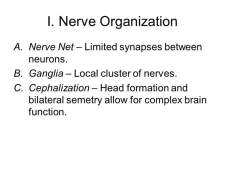 I. Nerve Organization A.Nerve Net – Limited synapses between neurons. B.Ganglia – Local cluster of nerves. C.Cephalization – Head formation and bilateral.