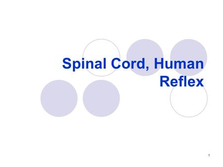 Spinal Cord, Human Reflex 1. Gross Anatomy of the Adult Spinal Cord 2.