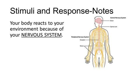 Stimuli and Response-Notes Your body reacts to your environment because of your NERVOUS SYSTEM.