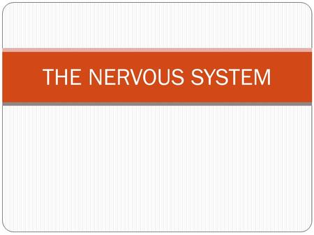 THE NERVOUS SYSTEM. DEFINITION the body's communicator electrical & chemical changes relay messages nerves are strings of neurons (special cells) that.