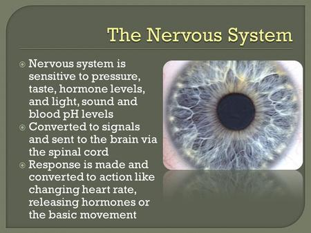  Nervous system is sensitive to pressure, taste, hormone levels, and light, sound and blood pH levels  Converted to signals and sent to the brain via.