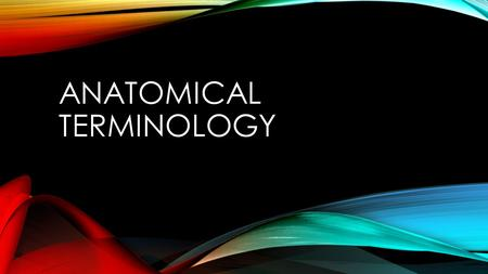ANATOMICAL TERMINOLOGY. OBJECTIVES Students will be able to apply knowledge of vocabulary and terminology to describe and locate the following: Anatomical.