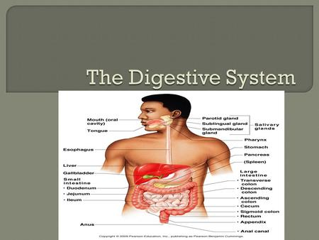  Food must be broken down into nutrients that can be absorbed into the blood and carried to our body  The collection of organs that carry out digestion.