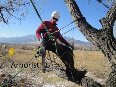 Arborist. An arborist, or (less commonly) arboriculturist, is a professional in the practice of arboriculture, which is the cultivation, management, and.