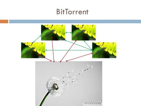 BitTorrent. BitTorrent network  On the itinerary:  Introduction to BitTorrent  Basics & properties  3 Interesting analysis results.