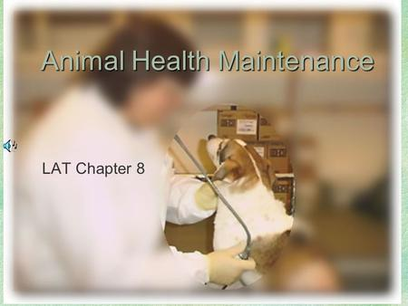 Animal Health Maintenance LAT Chapter 8. Chapter 8 LAT Presentations Study Tips If viewing this in PowerPoint, use the icon to run the show.  Mac users.