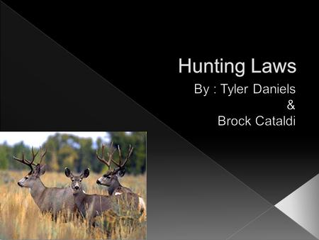  Deer damage farmers crops.  Deer cause many car accidents.  Many deer are being poached.