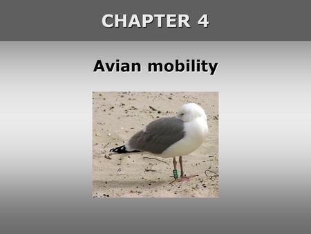 Avian mobility CHAPTER 4. Avian <strong>dispersal</strong> Definition <strong>of</strong> <strong>dispersal</strong> '<strong>dispersal</strong>' refers to movements that, at the population level, have no fixed direction.