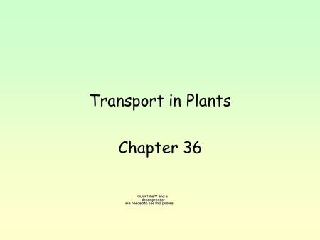 Transport in Plants Chapter 36. To get onto land, plants evolved way to keep from drying out, to stand upright. Transport nutrients and water both over.