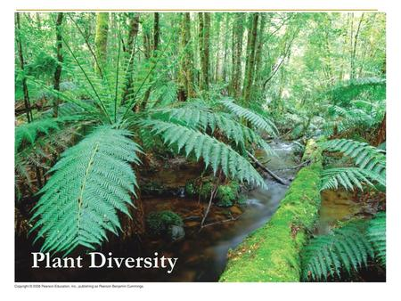 Plant Diversity. Overview: The Greening of Earth Imagine all land without life. Completely barren.