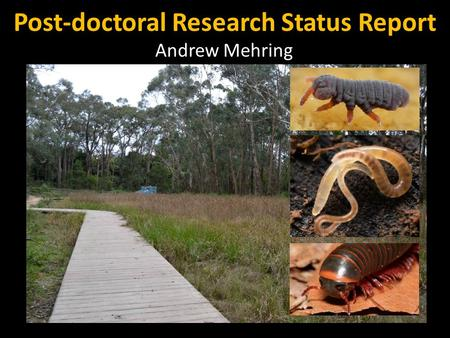 Post-doctoral Research Status Report Andrew Mehring.
