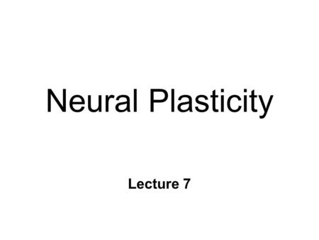 Neural Plasticity Lecture 7. Neural Plasticity n Nervous System is malleable l learning occurs n Structural changes l increased dendritic branching l.