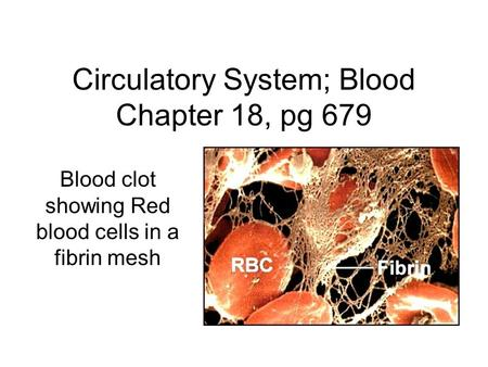 Circulatory System; Blood Chapter 18, pg 679 Blood clot showing Red blood cells in a fibrin mesh.