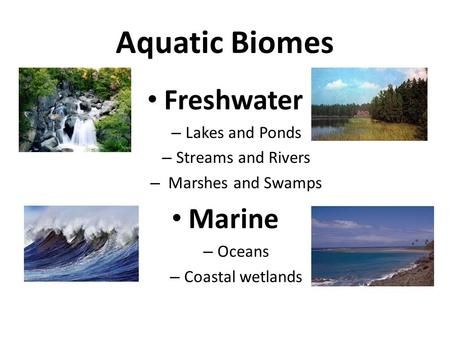 Aquatic Biomes Freshwater – Lakes and Ponds – Streams and Rivers – Marshes and Swamps Marine – Oceans – Coastal wetlands.