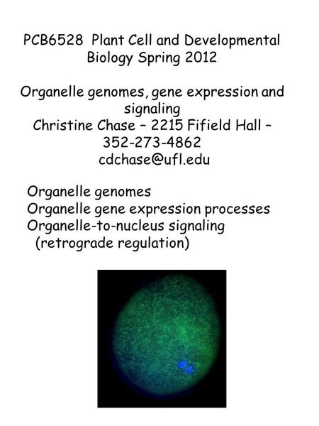 Organelle genomes Organelle gene expression processes Organelle-to-nucleus signaling (retrograde regulation) PCB6528 Plant Cell and Developmental Biology.