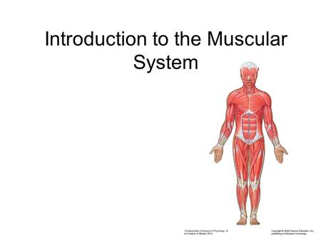 Introduction to the Muscular System. muscle –fascicles fibers fibers of a single fascicle always parallel fascicles of a muscle can be arranged in various.