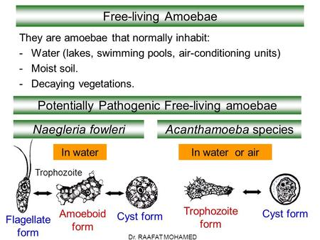 Free-living Amoebae They are amoebae that normally inhabit: -Water (lakes, swimming pools, air-conditioning units) -Moist soil. -Decaying vegetations.