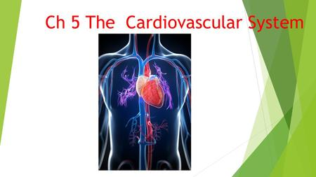 Ch 5 The Cardiovascular System. Overview  Heart:cardi/o> Pumps blood into the arteries.  Arteries: arteri/o> Transports blood away to all body parts.