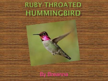 By Breanna.  This hummingbird fits into the birds.  Its scientific name is Archilochus Colubris.  The lifespan of this hummingbird is 5 years in the.