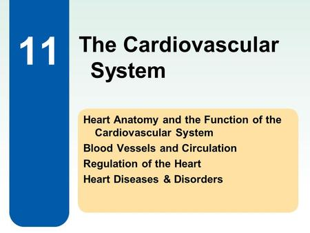 11 Heart Anatomy and the Function of the Cardiovascular System Blood Vessels and Circulation Regulation of the Heart Heart Diseases & Disorders The Cardiovascular.