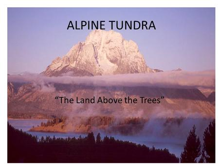 "ALPINE TUNDRA ""The Land Above the Trees"". ""Tundra"" Russian: ""land of no trees"" Has great appeal to people…. Why? Everything in miniature: – ""Sky the size."