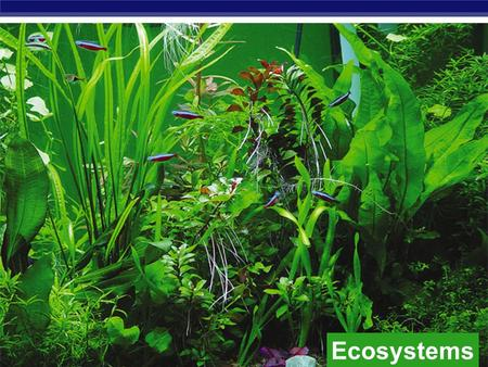 Ecosystems biosphere ecosystem community population Studying organisms in their environment organism.