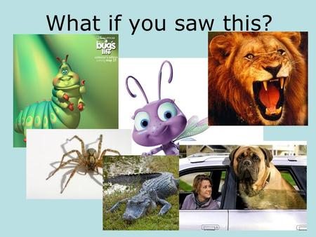What if you saw this?.
