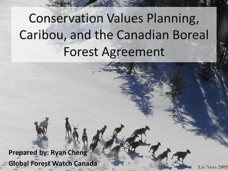 Conservation Values Planning, Caribou, and the Canadian Boreal Forest Agreement Prepared by: Ryan Cheng Global Forest Watch Canada.
