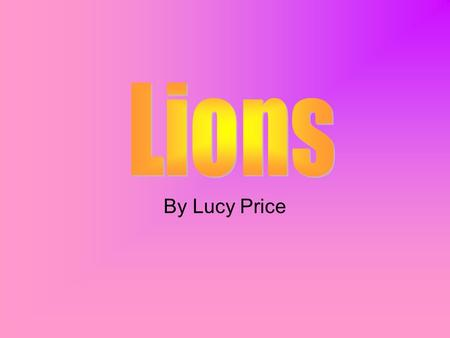 By Lucy Price A lion is a mammal in the cat family. They are a predator to most animals that live in the grasslands. A lion has tan fur (the males have.