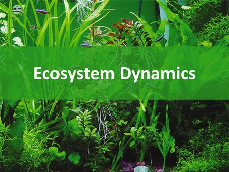 Ecosystem Dynamics Essential questions What limits the production in ecosystems? How do nutrients move in the ecosystem? How does energy move through.