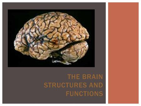 THE BRAIN STRUCTURES AND FUNCTIONS.  To learn features and functions of CNS  To understand the brain structure and function and how it relates to animal.