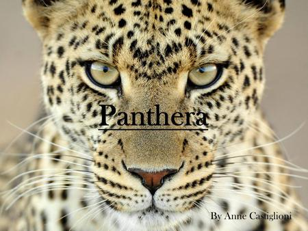 "Panthera By Anne Castiglioni. Mission and Vision ""Panthera has brought together the world's leading wild cat experts to direct and implement effective."