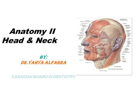 Anatomy II Head & Neck BY: DR.Yahya Alfarra CANADIAN BOARD IN DENTISTRY.