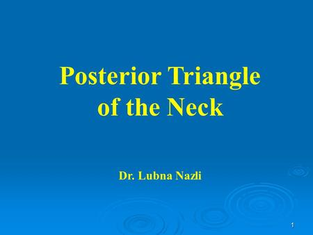 Posterior Triangle of the Neck