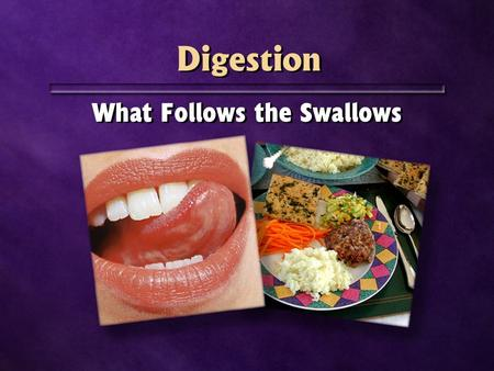 Digestion What Follows the Swallows.