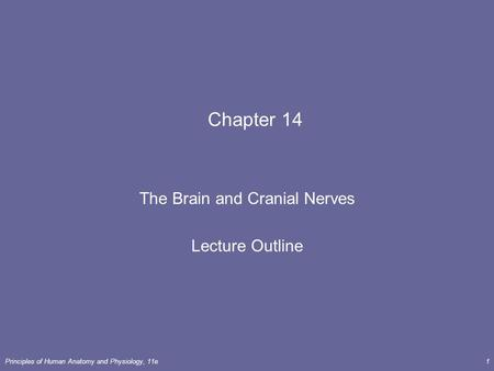 Principles of Human <strong>Anatomy</strong> <strong>and</strong> <strong>Physiology</strong>, 11e1 <strong>Chapter</strong> 14 The Brain <strong>and</strong> Cranial Nerves Lecture Outline.