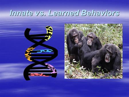 Innate vs. Learned Behaviors   com/biology/animalbeh avior/learning/problem s_1.html.
