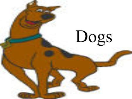 Dogs. Dog Terminology Male Dog- Dog Female Dog- Bitch Young Dog- Pup Group of Dogs- Pack Act of a dog given birth- Whelping.