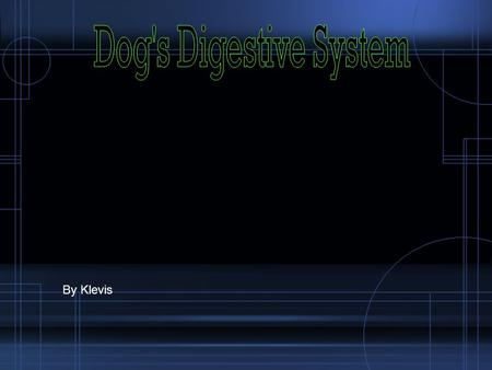 Dog's Digestive System By Klevis.