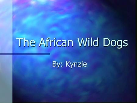 The African Wild Dogs By: Kynzie Introduction My animal has brown, black and white spots. My animal has brown, black and white spots. The first word.
