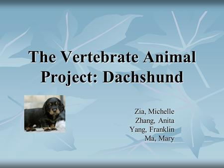 The Vertebrate Animal Project: Dachshund Zia, Michelle Zhang, Anita Yang, Franklin Ma, Mary.